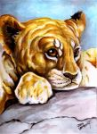 Lion Cub by Batman4art