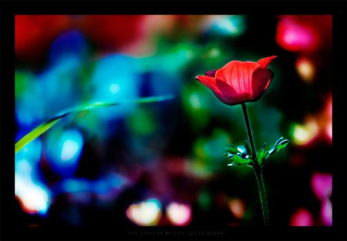 You light up my life by gilad