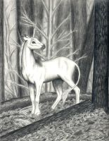 Forest Unicorn by andreags