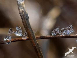 Bird and Mice of Ice by albatros1