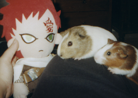 Gaara Plushie and the Piggies by Bobbissimo