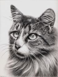 Cat in graphite by rasberry6