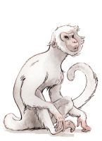 Year of the Monkey by MobidicMobidic