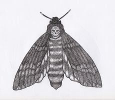 Death's-head Hawkmoth Pen and Ink Closed Wings by JesseAllshouse