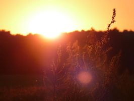 The Sunset by Habos