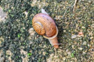 Tiny Snail on the stairs by Shadowhawk9973