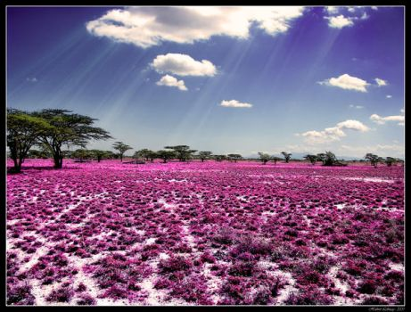 The Meadow Of Life by Hubzay