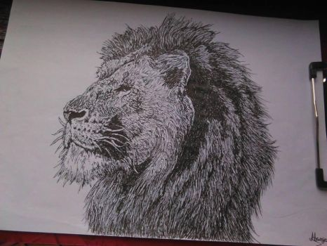 Lion drawing with pen by Marij4