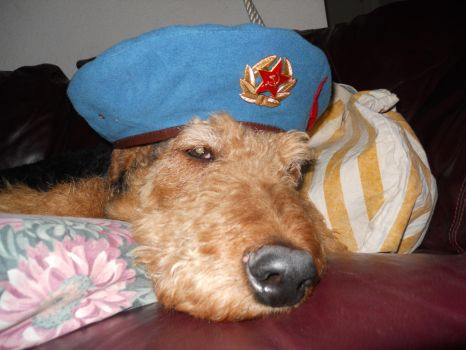 max in a sky blue Beret. by ushankashenk