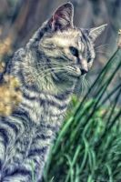 Stripey cat + Chives by Darth-Marlan