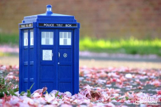 Moffat TARDIS in the Blossom by tulf42