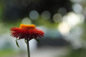 Another Flower by skypho