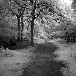Path through the trees by bmh1
