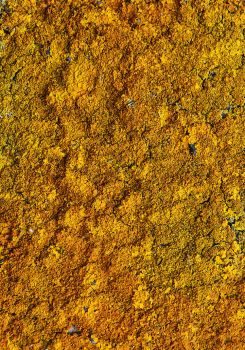 Large Lichen Stock Painting by aegiandyad