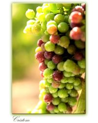 Fruit of the Vine by ThirstyEye