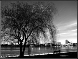 Weeping Willow by Ryser915