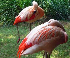 Flamingos by MoonroadProductions