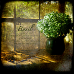 Basil by Inadesign