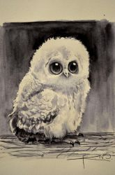 Owlet by Imaginesto