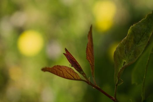 Spring leaves by MisterTryster