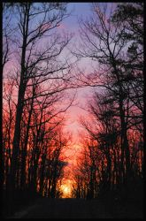 Fire in the Sky by ashweed420