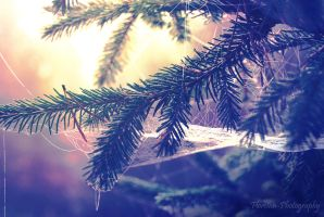 Winter thoughts by Floreina-Photography
