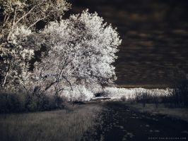 Light of the Setting Sun - 5 of 8 by KBeezie