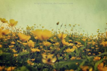 Buttercups by ivoice