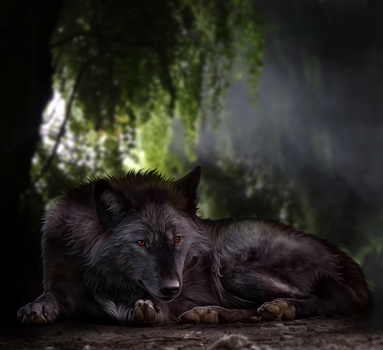 Resting in the Jungle Light by Nanarc
