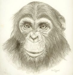Zoobooks Chimp by FablePaint