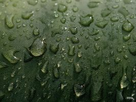 drops on agave by Lionpelt-66
