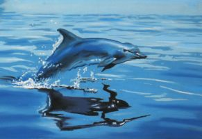 Dolphin by fourquods