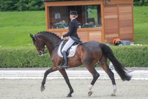 Dressage Stock 042 by TARSKYN