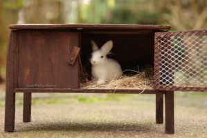 Schleich bunny with rabbit hutch by PhoenixRanch