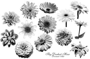 Zinnia and Daisy Brushes by Thy-Darkest-Hour