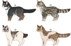 { s e t :: cat adoptables, closed by nargled