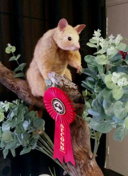 Competition Possum by LuxTaxidermy