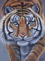 Turpentine Creek Tiger  by HouseofChabrier