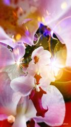 The world of dancing flowers 7 by Mishelangello