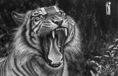 Sumatera Tiger by toniart57