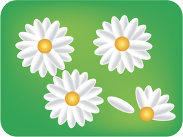 Daisies by Diskill-Stock