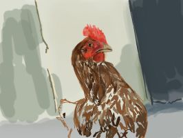 Chicken WIP 1 by incandescent-smile