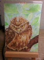 A Minerva's owl by Chayt