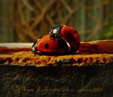 Ladybird Love by annzie1991
