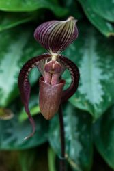 MOBOT: 2011 Orchid Exhibit IV by breaking-reality