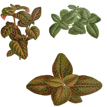 Variety of Plants PNG by chaseandlinda