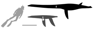 Plesiosaurs of the wessex formation by AlternatePrehistory