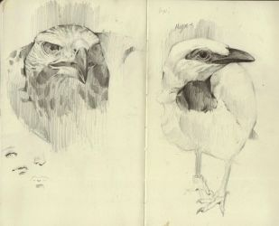 Moleskin Birds by Dinomaniac