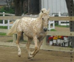 Horse Stock 1 by Creativty-is-Equine