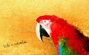 Life is colorful by mengqingfei
